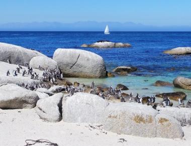 vakantaseren, citytrip, Kaapstad, simonstown, pinguins